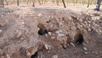 El Ministerio de Agricultura declara la emergencia cinegética por daños de conejo de monte en las cinco provincias de Castilla La Mancha