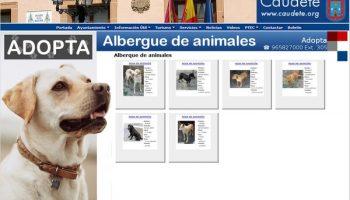 El Ayuntamiento de Caudete publica un apartado en su web para ver los animales del Albergue Municipal que se pueden adoptar