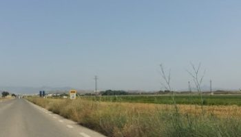 La carretera de Villena continúa con gran cantidad de maleza en las cunetas