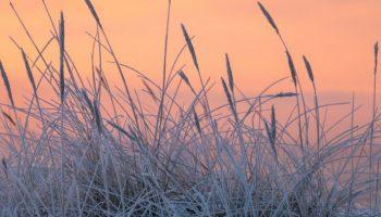 Caudete sentirá a partir de mañana los efectos de la masa de aire polar