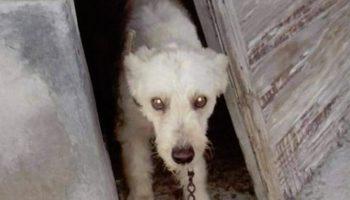 Denuncian la situación de varios perros en una finca de Caudete