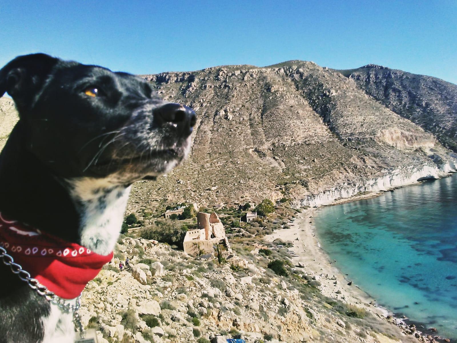 perro con pañuelo rojo mirando el mar y la montaña