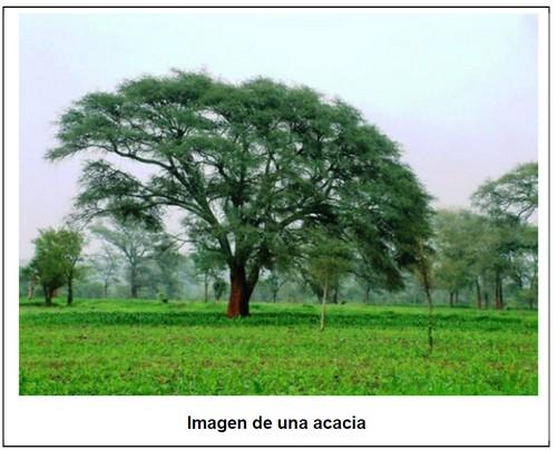 Construir con árboles sagrados, Caudete Digital - Noticias y actualidad de Caudete (Albacete)