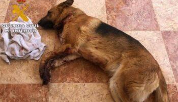 Tres detenidos por extorsionar a un joven en Caudete y causar graves daños a su perro