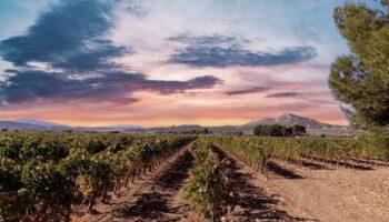 La prestigiosa Bodega Vicente Gandía ha comprado la Finca Casa Gallur en Caudete, donde elaborará vinos de alta gama