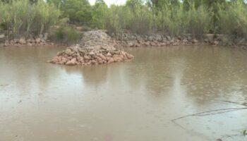 Añaden agua a la charca de La Toconera y se realizan trabajos de mantenimiento en su entorno